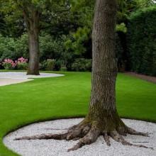 Декор бордюров галькой вокруг хвойных деревьев
