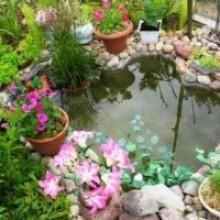 Натуральный камень в оформлении зоны пруда, ручья, басейна.